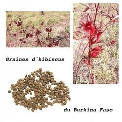 Seeds Hibiscus Bissap Burkina Karkadét