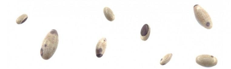 Linga or Lingam, Shiva stone.