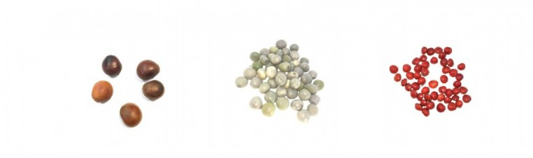 Seeds or plants of the world can be used in jewelry, game or decoration.